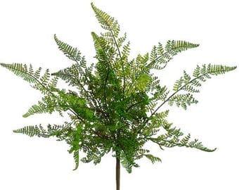 Set of Three Fern Bush