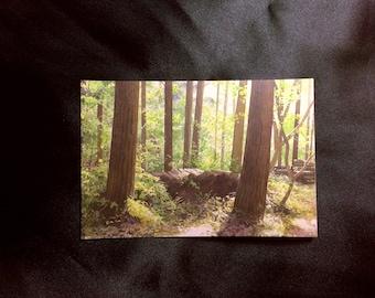 Original postcard, Watercolour art, watercolor, Abe Toshiyuki, Japanese artist, Hyperrealism, Forest, Nature