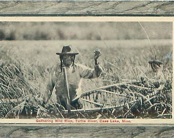 Cass Lake, MN - American Indian Gathering Wild Rice on the Turtle River Vintage rppc, Real Photo Postacard