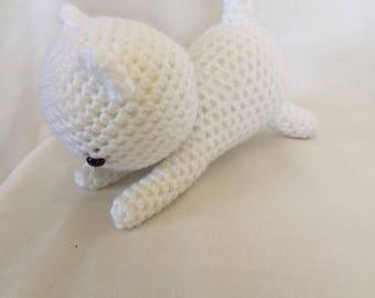 White playful Kitten
