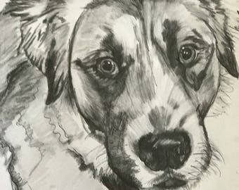 Paxton Commisioned Pet Sketch