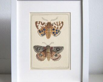 Art - Original Art - Watercolor Painting - Original Art - Moth Painting - Moth Art - Two Moths - Mother Watercolor Painting - Two Moths