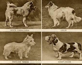 1914 Chart of Dogs Whippet Pug Greyhound Collie Chow Chow Highland Terrier Basset Hound Great Dane