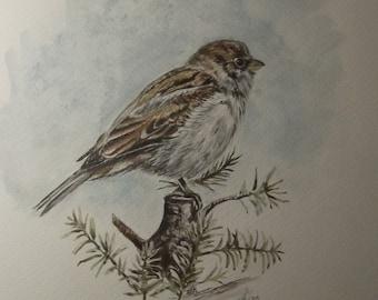 Sparrow - Original Painting