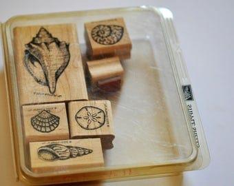 Stipple Shells - RARE Stampin' Up! stamp set