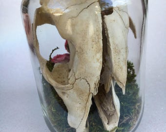 Raccoon Skull w/ Pink Flowers