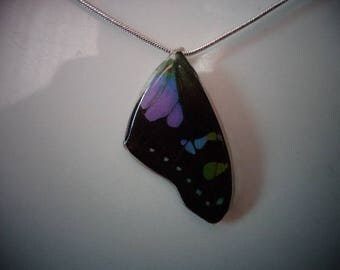 REAL Butterfly Wing Necklace with a Sterling Silver Chain THICK & SOLID