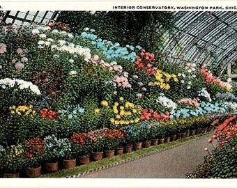 Vintage Chicago Postcard - Flowers in Bloom at Washington Park Conservatory (Unused)