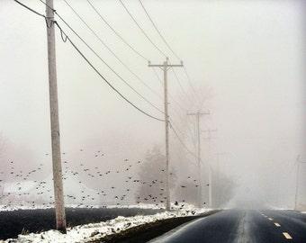 "Dark road photography landscape print autumn fog mist trees birds snow - ""Down the road"" 8 x 10"