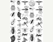 SALE Bug Theme Sepia Decals for Glass Fusing Image Transfer NEW41Bugs