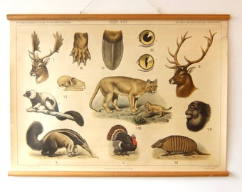Vintage Pull Down Chart ,animals of america,