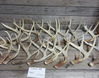 Bulk Lot of 15 Small Shed Whitetail and Mule Deer  Antlers- Lot No. 170302-BB