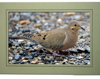Dove Cards - Mourning Dove Card - Blank Inside - Dove Note Cards - Mourning Dove Notecards - Handmade Bird Cards - Doves