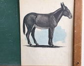 Vintage School Flashcard- Mule