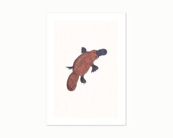 Platypus - A4 Giclee Art Print