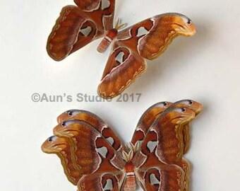 Paper moths - Realistic paper moth cut outs - 5 Atlas moths Attacus Atlas