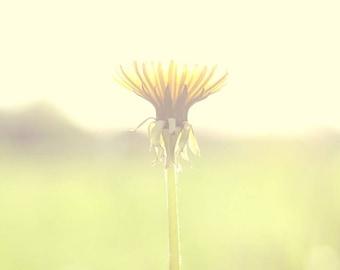 Dandelion Photograph, Fine Art Photography, Print, Summer, Spring, Flower, Yellow, Shabby Chic, Home, Decor, Wall, Photo, Nature, Field, Art