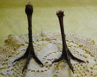 Preserved Pheasant Feet Pair