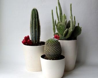 W H I T E  S T O N E : ceramic succulent planter set