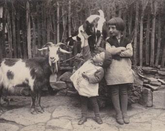 Children with Goats, Bulgarian Photo, circa 1930s