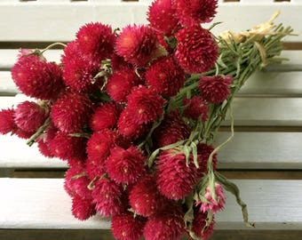 DRIED FLOWERS Bunch Lovely Rosy purple carmine color Globe Amaranth Flower GOMPHRENA flower bunch Prim Wedding Bouquet Shabby cottage floral