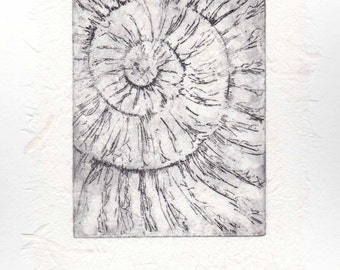 Original ammonite fossil zinc etching no.51 with chine colle jurassic Dorset coast fossil spiral fossil ammonites golden section
