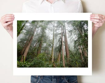 Redwood trees photography print. Muir Woods California landscape photograph. Large misty forest artwork, oversized woodland art print