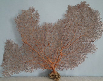 "17"" x 11.5"" Large Natural Red Color Sea Fan Seashells Reef Coral"