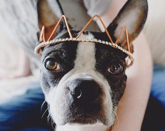 Dog Crown - Hat for Dogs - Pet Jewelry