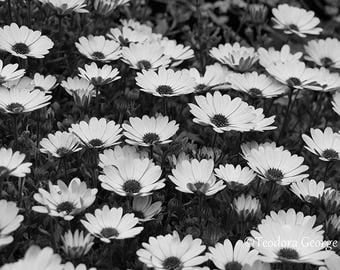 Black and White Flower Plant Photography, Wall Print, Botanical