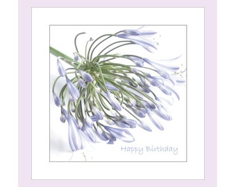 Flower Birthday Photo Card, Greetings Card, Photographic Card, Flower Notecard, Floral Birthday Card, Agapanthus Note Card