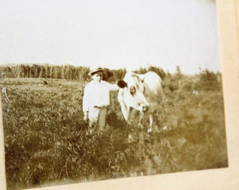 Antique Photograph Cabinet Card A Boy and His Cow 5.25 x 4.25 Inches