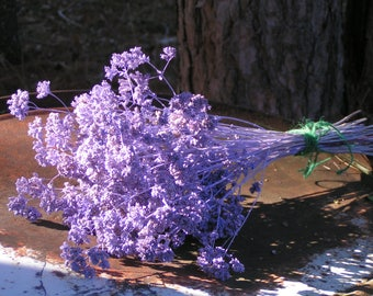Lavender Colored Oregano Flowers***50 Sturdy Stems***Beautiful Addition to Bouquets, Wreaths, Crafts for Wedding or Home Decoration