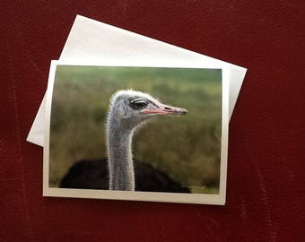 Thinking Of You Card / Ostrich Note Card / Hello Note Card / MVMayoPhotography / Free US Shipping