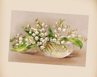 Lily Of The Valley - New 4x6 Vintage Postcard Image Photo Print - FF01