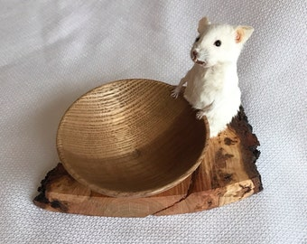 Taxidermy mouse with handturned bowl.