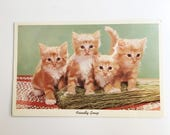 friendly group vintage postcard with kittens