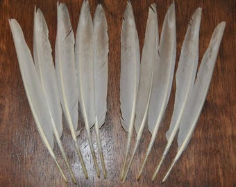 10 Large Gray and White Duck Wing Feathers