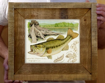 Framed Largemouth Bass - 8 x 10 inch limited edition print by Matt Patterson, fish print