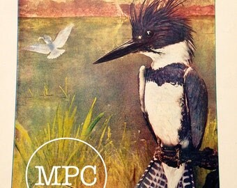 1904 Antique Lithograph of a Belted Kingfisher