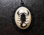 Lacy Scorpio Real Black Scorpion Preserved Specimen in Resin Black Enamel Spiderweb Cameo Entomology Bug Necklace