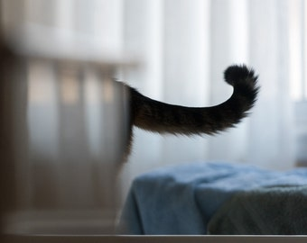 Kitty's Tail, Cat Photography Print, Wall Art, Upstate NY, EyeWasHere