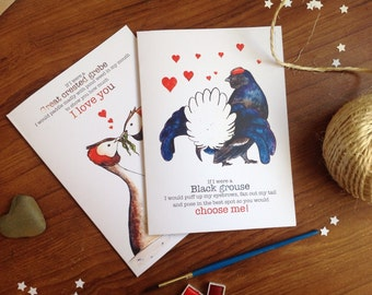 Wildlife Love card/Anniversary cards, weird love advice from birds