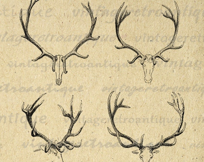 Printable Deer Antlers Graphic Deer Digital Image Clipart Collage Sheet Image Animal Download Vintage Clip Art Jpg Png Eps HQ 300dpi No.1099
