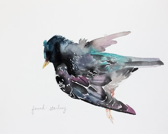 found: starling . original watercolor painting