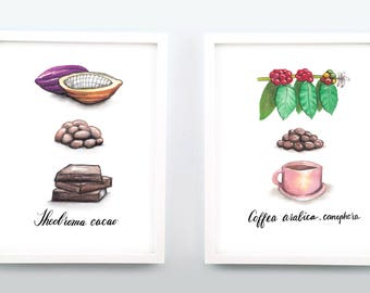 Chocolate, Coffee - 3 stages watercolor