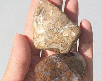 Moss Agate & Stromatolite-Mixed Pair-Polished Stones-Specimen Set of 2