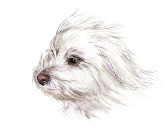 Maltese Terrier // animals, pet portrait, animal print, art print, neutral, wall art, dogs