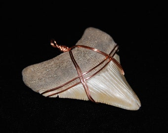 "Wire Wrapped 2  7/16"" Fossilized Megalodon Shark Tooth"
