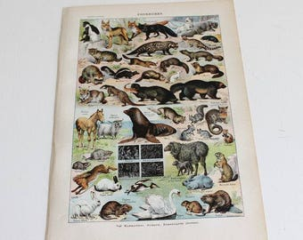 French print FURBEARERS - Vintage Poster Art Print, Furs print, Wall decor, Larousse, Antique Prints, E437